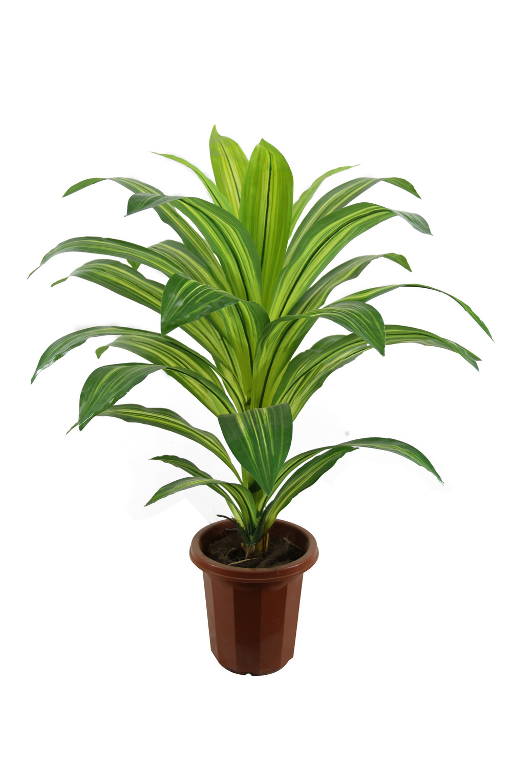 Best type of plant for your desk virtual vocations for Plante dracaena