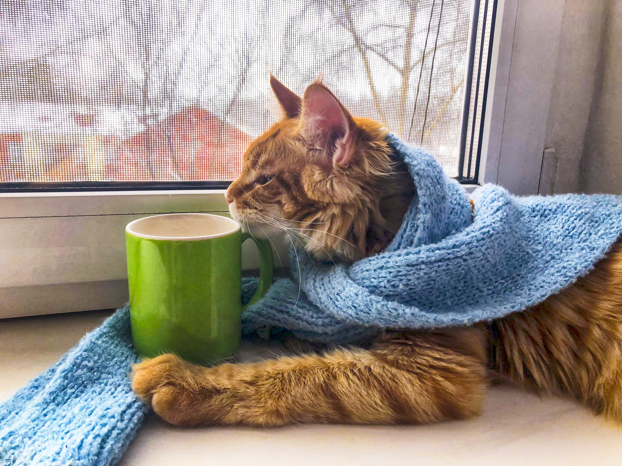 autumn cat - new November remote jobs - Virtual Vocations telecommute and flexible jobs