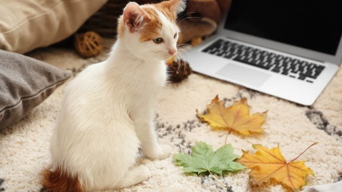new November remote jobs - cat with laptop - Virtual Vocations telecommute and flexible jobs
